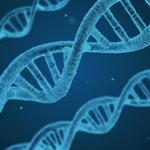 ミジンコの遺伝子は人間の遺伝子よりも多い?遺伝子とDNAの違いについて