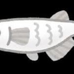 ミジンコを食べる魚は?ミジンコと人工餌違いについて