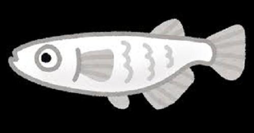 ミジンコ 食べる 魚