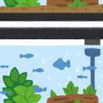 水槽にミジンコがいるメリット、水質が良くなる?