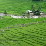 田んぼの土からミジンコを採取する方法