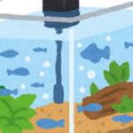 ミジンコを水槽で繁殖させるには?水質は気を付けるべき?