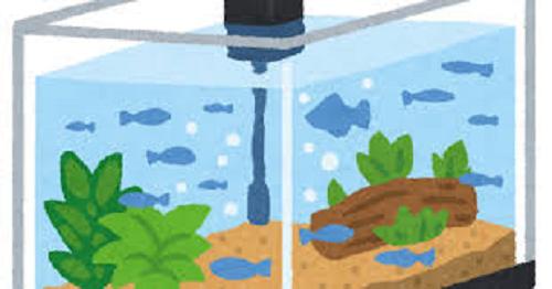 ミジンコ 水槽 繁殖 水質