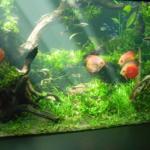 熱帯魚飼育に最適の活餌・ミジンコの繁殖方法