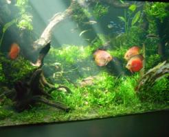 ミジンコ 餌 熱帯魚