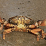 ミジンコが甲殻類に分類されるのはなぜなのか